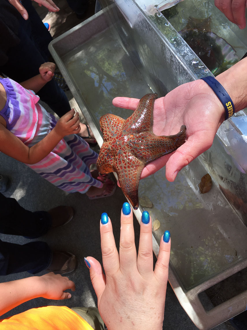 Children Touch Starfish