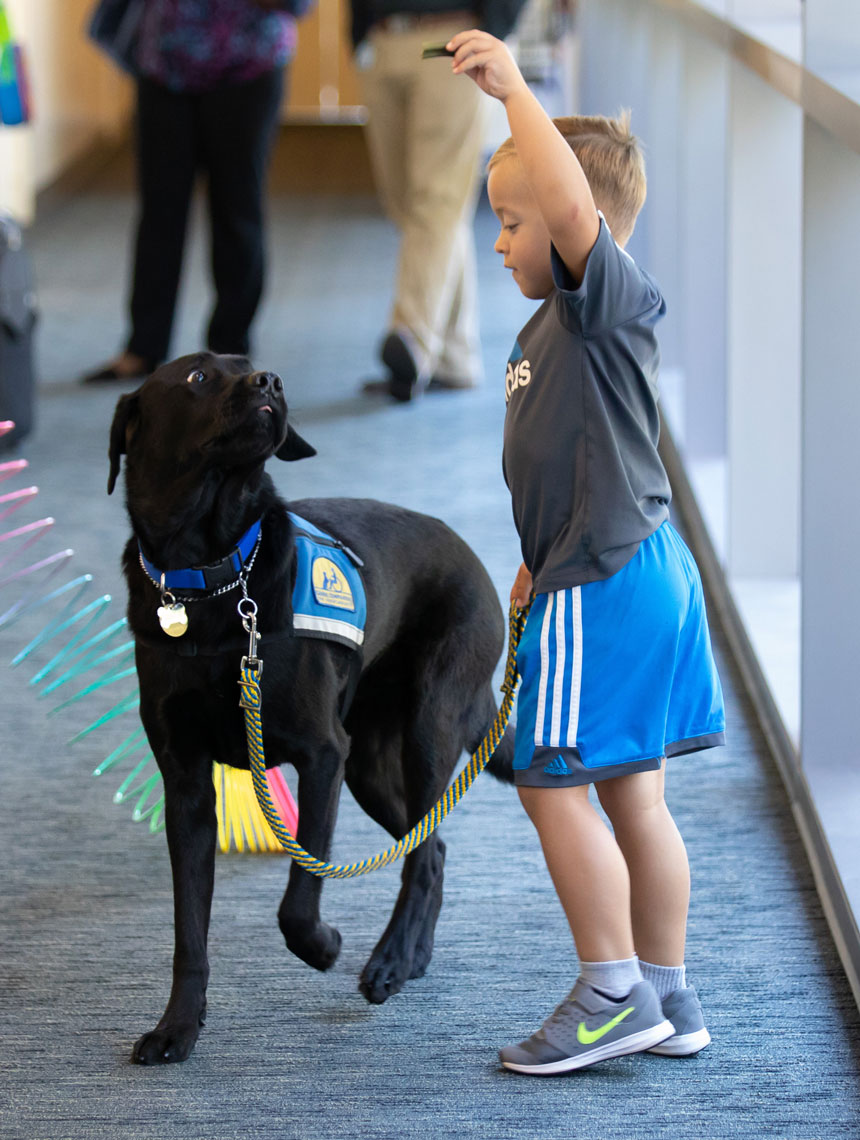 Boy Plays with Support Dog in the Hospital