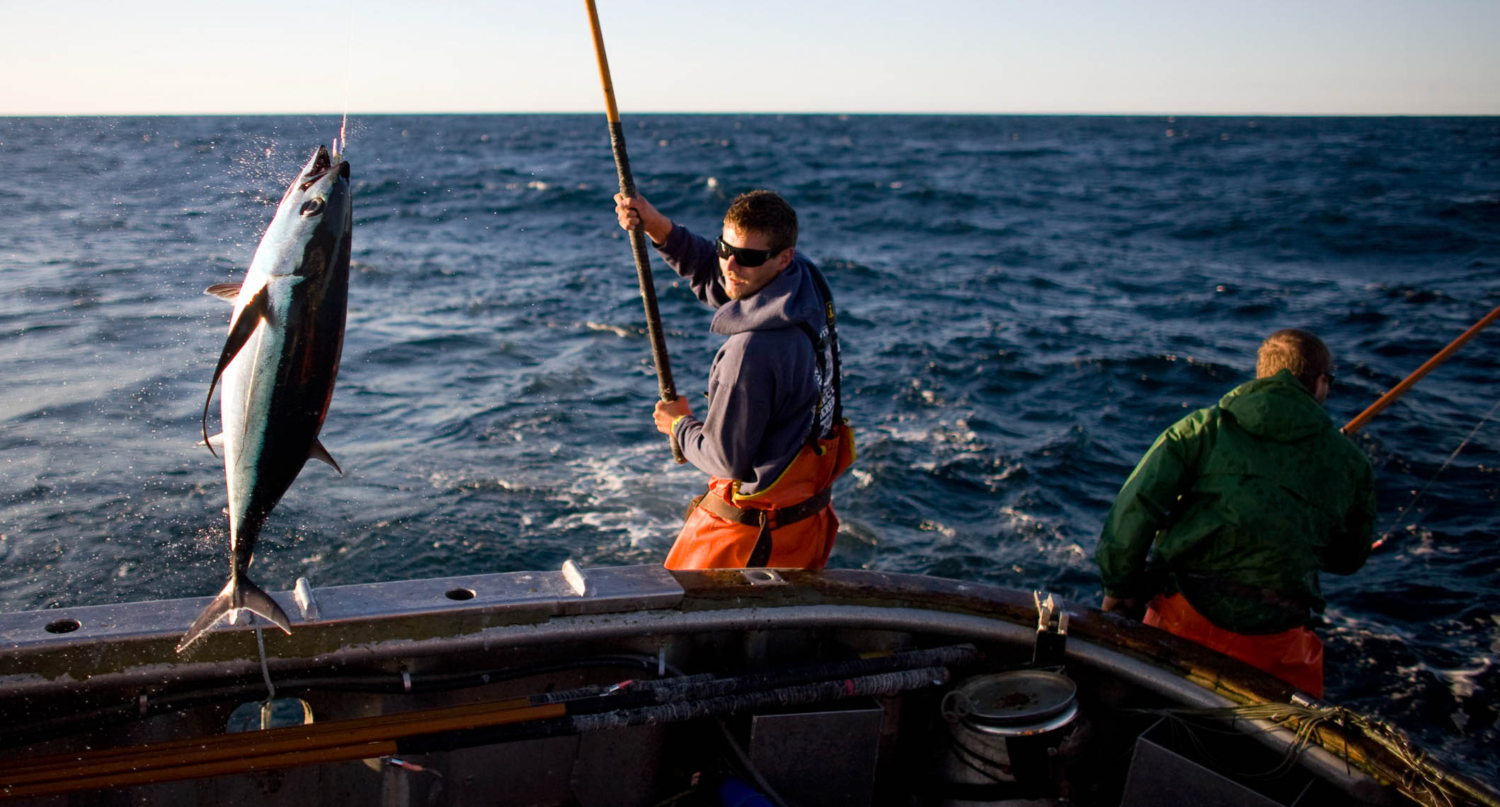 Catching Albacore  in Sustainable Fishery