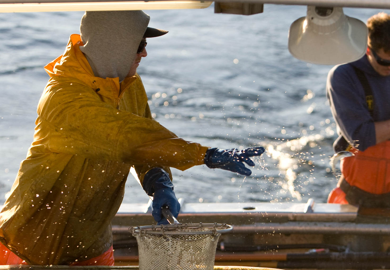 Crewman Throws Anchovies to Bait Albacore Tuna