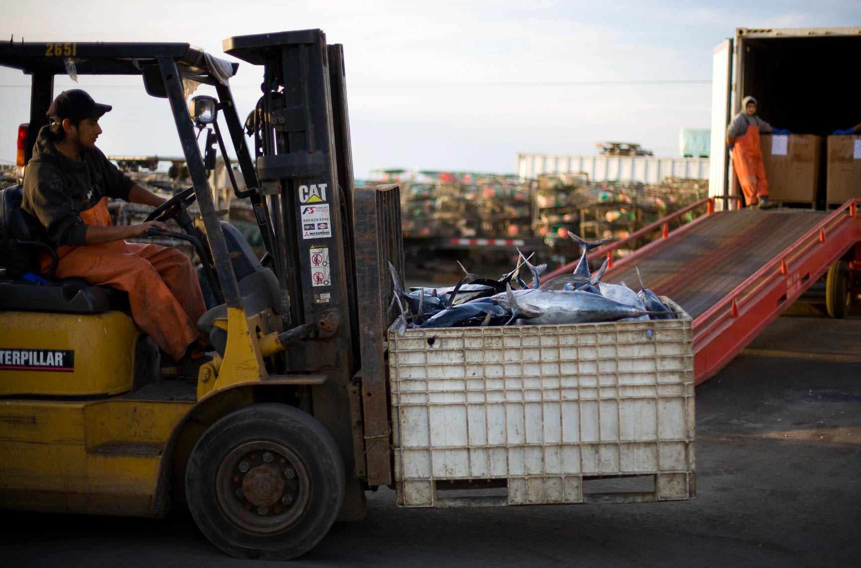 A Forklift Transport a Bin of Albacore Tuna