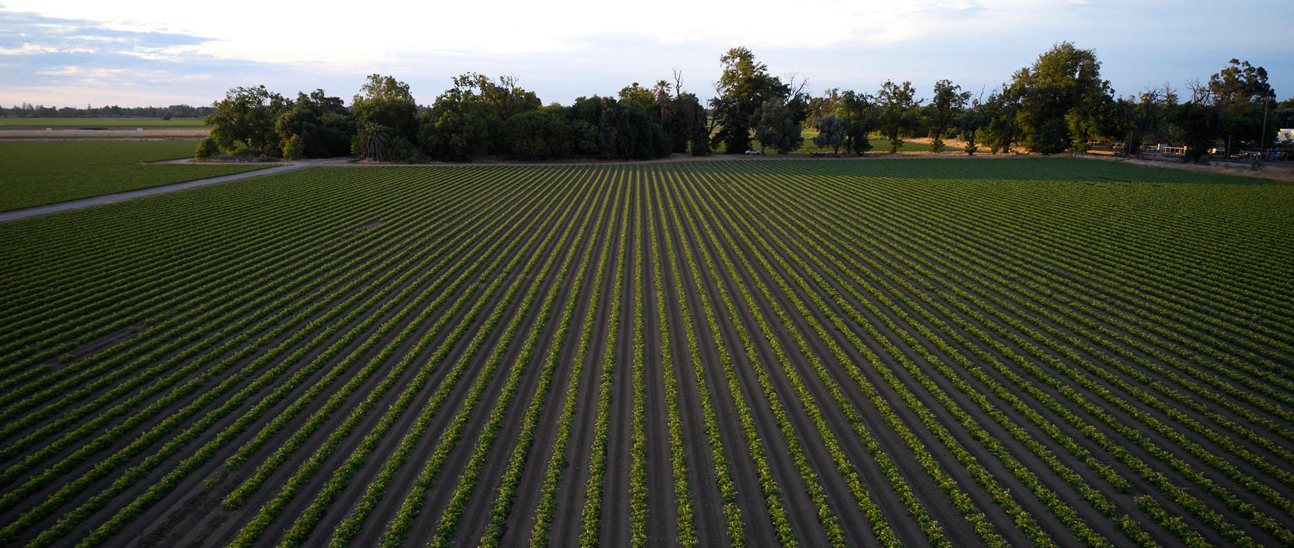 Rows of Crops Growing at a Farm