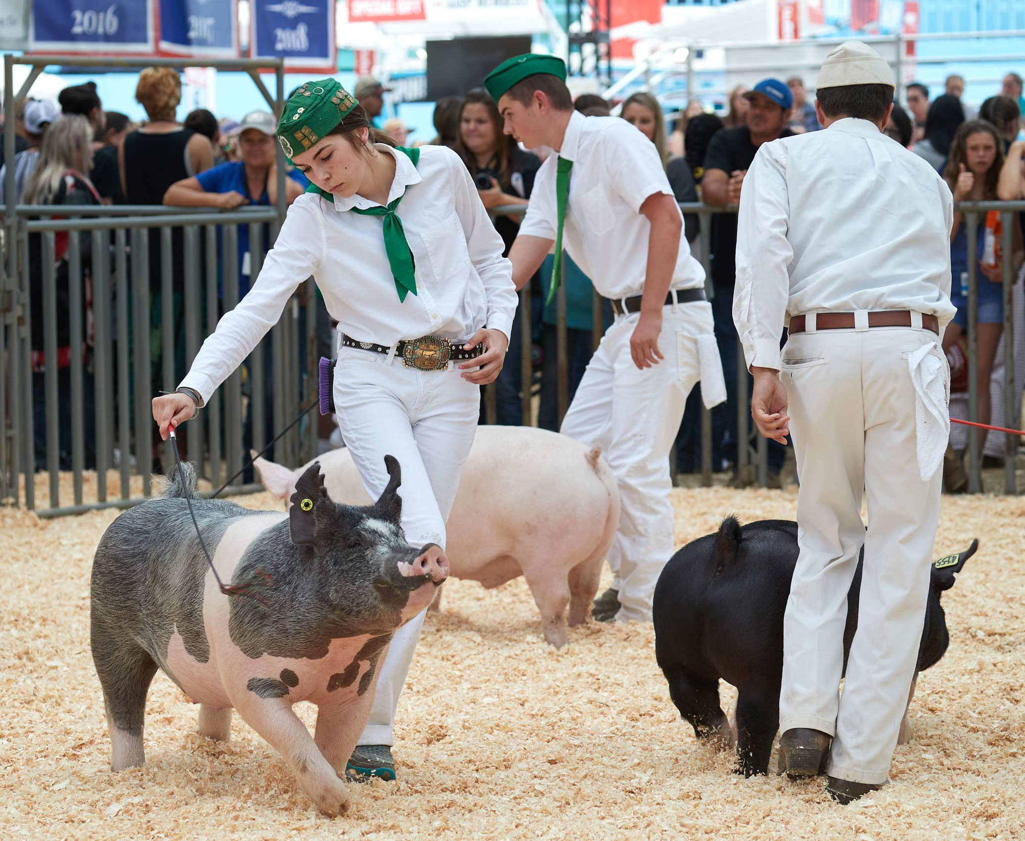 4H Swine Showmanship