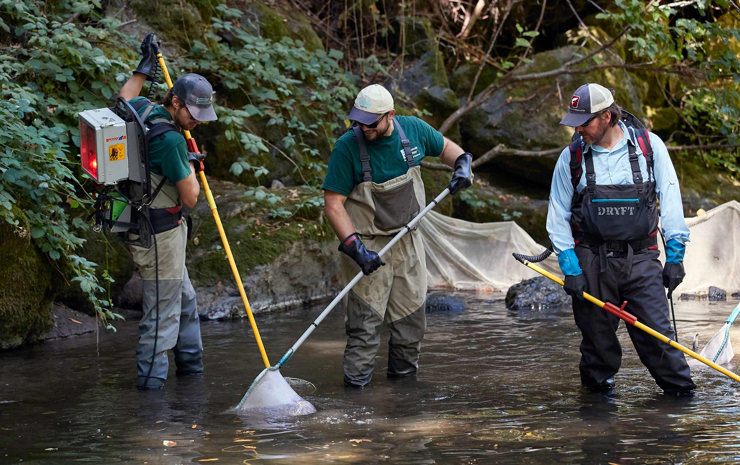 Researchers in Waders Electrofish in a Stream