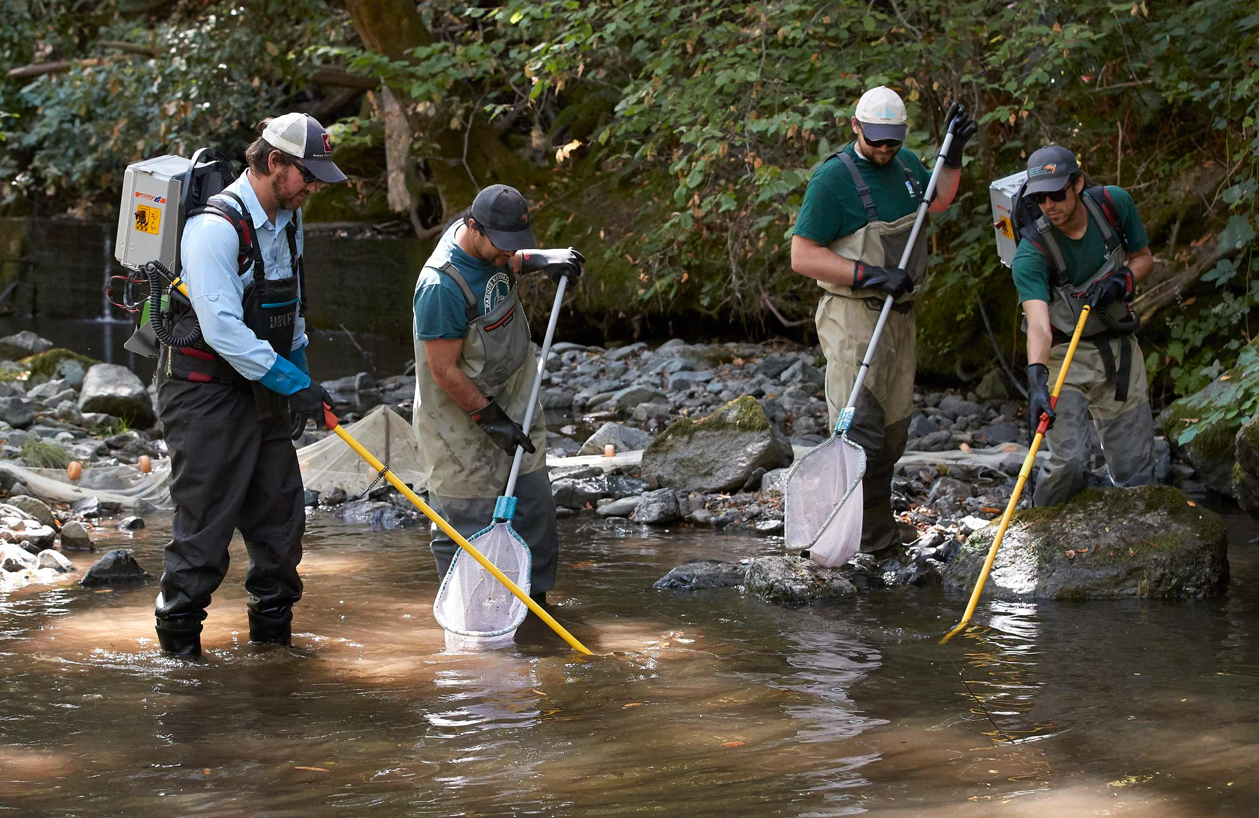 Researchers Electrofish in Stream to Sample Fish Populations