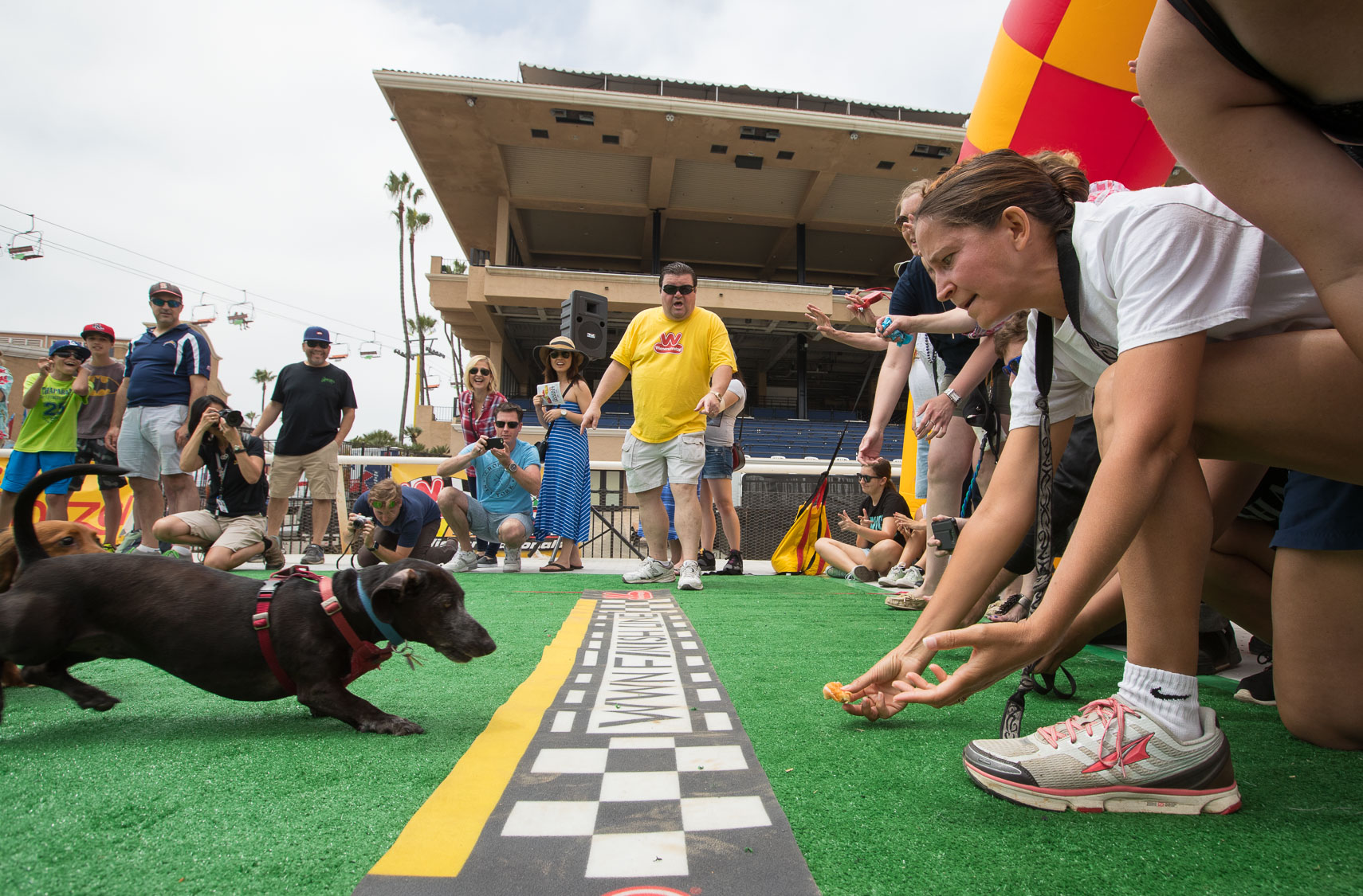 Wiener Dog Races 2