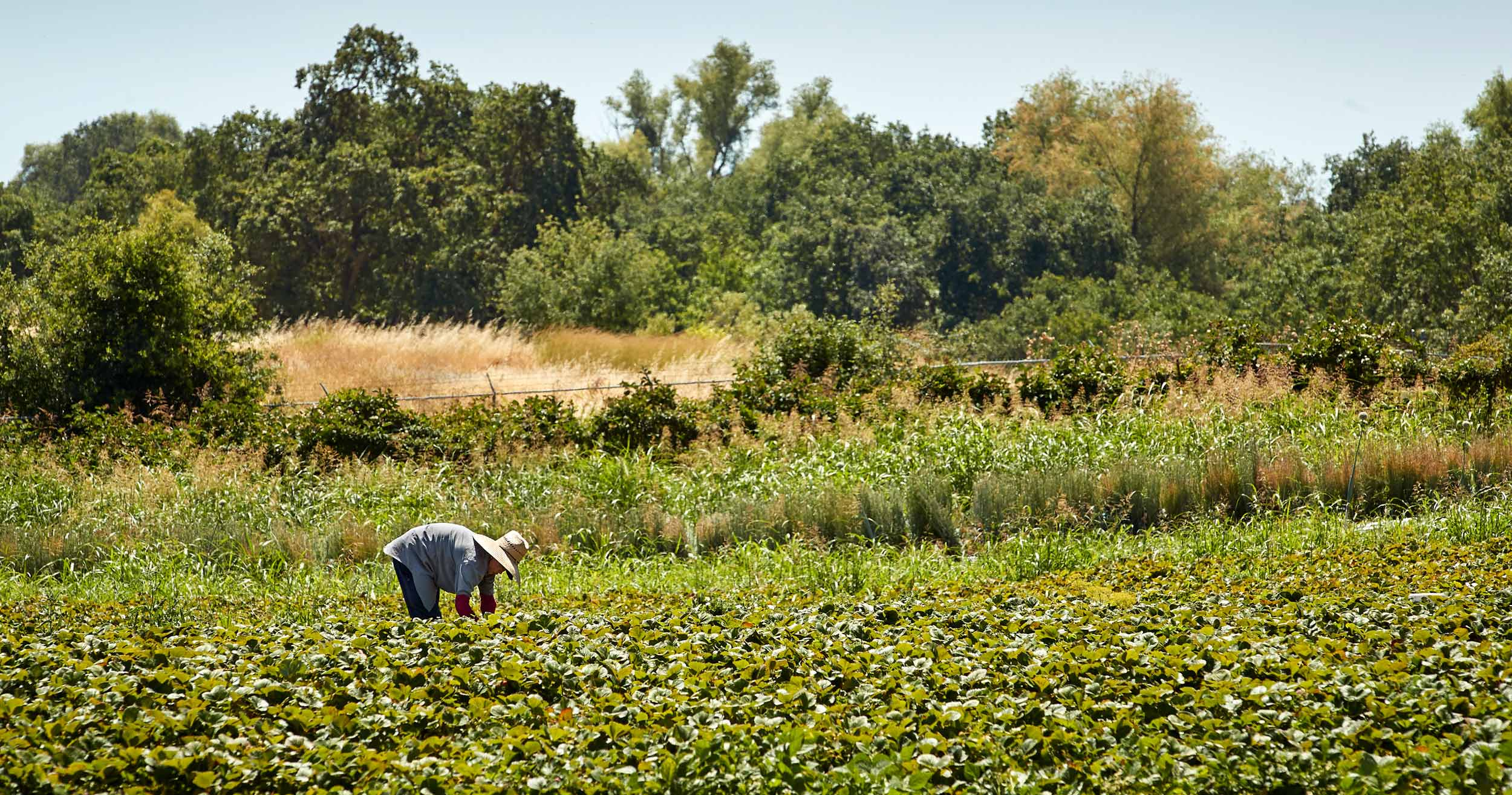 Farmer in Knights Landing