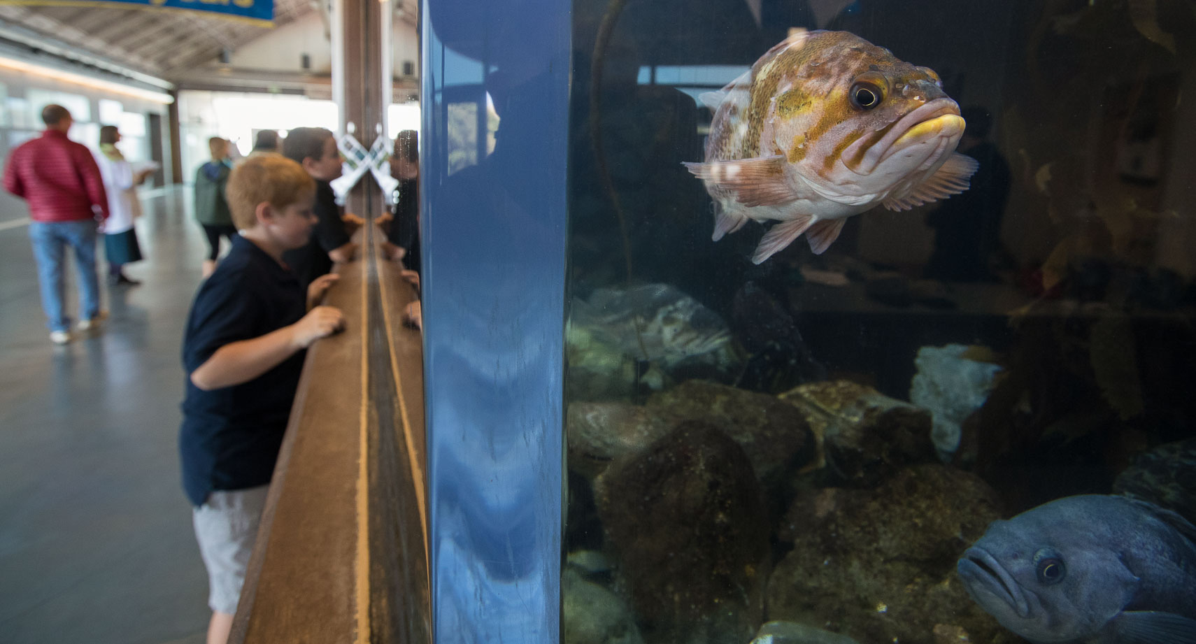 Boy Looks at Fish at the Bodega Marine Lab