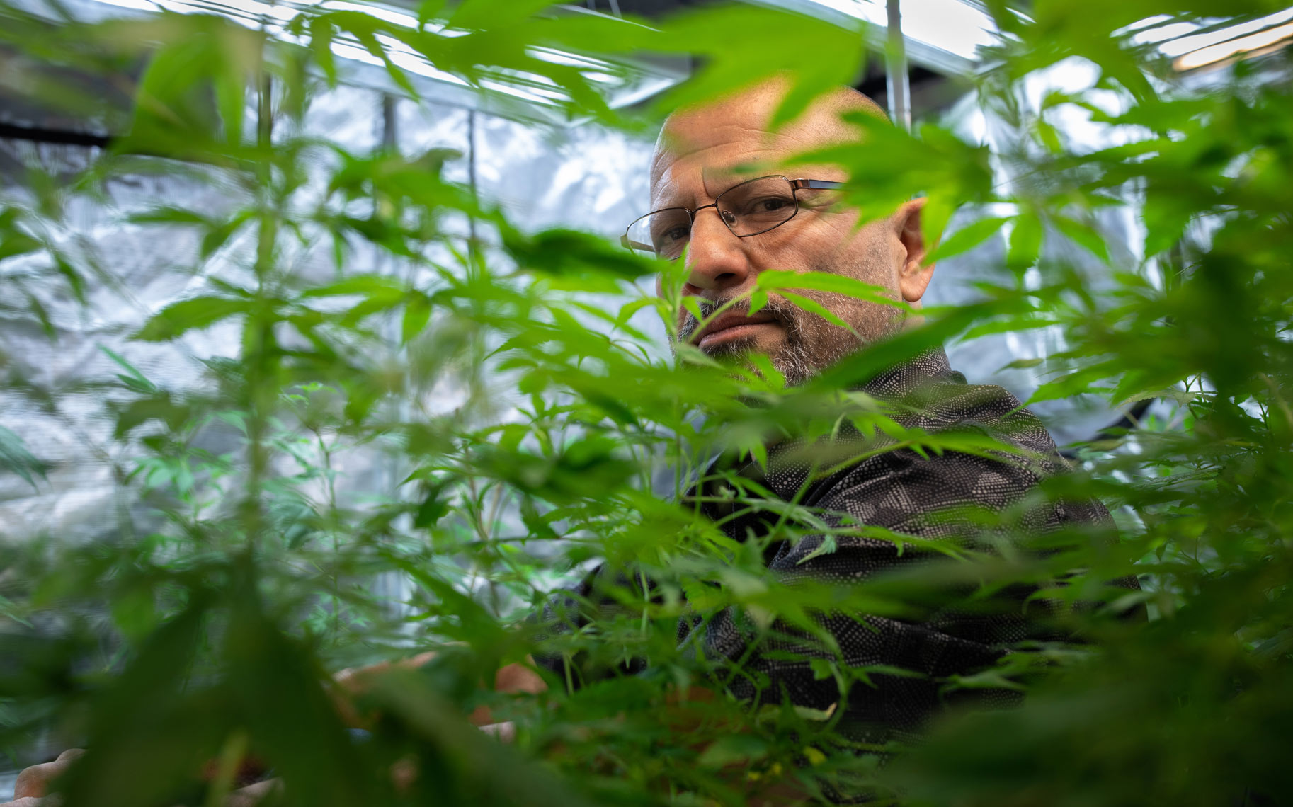 Marijuana Grower Nasser Azimi