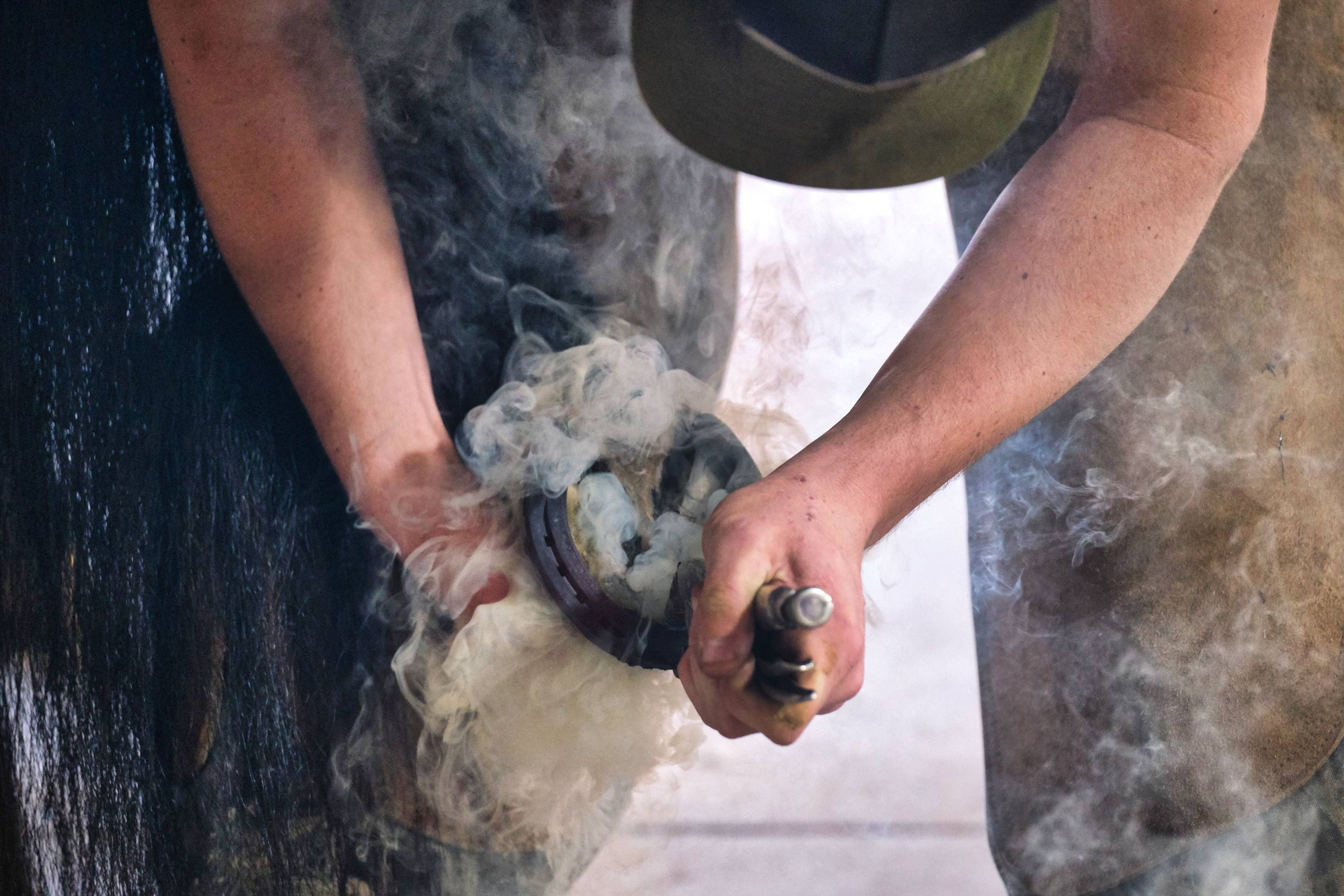 Student Farrier Hot Shoes a Horse