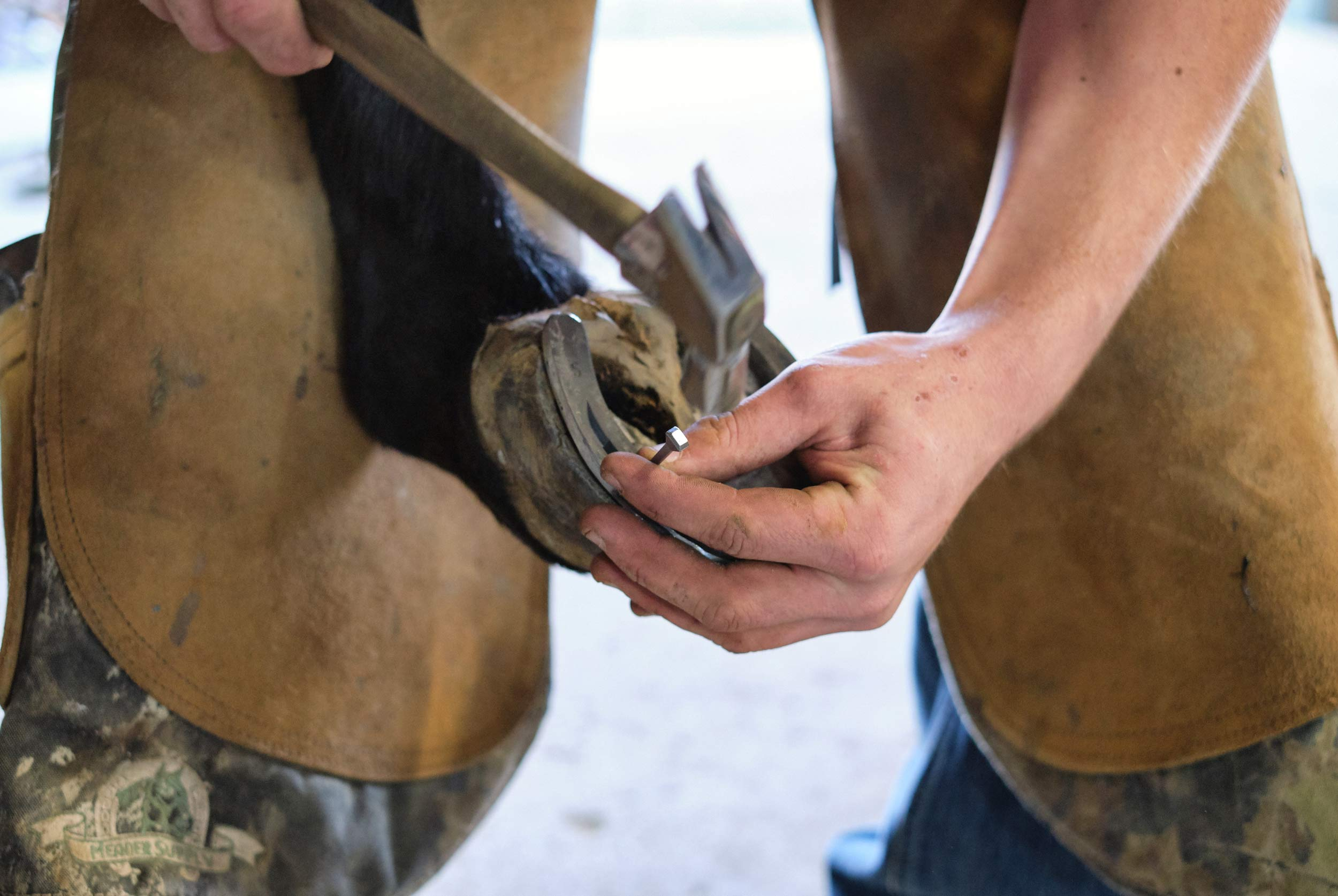 A Student Nails a Horseshoe onto the Hoof