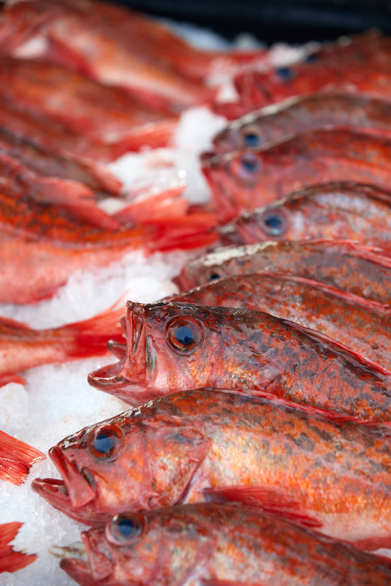 Rows of Rockfish on Ice at Fish Market