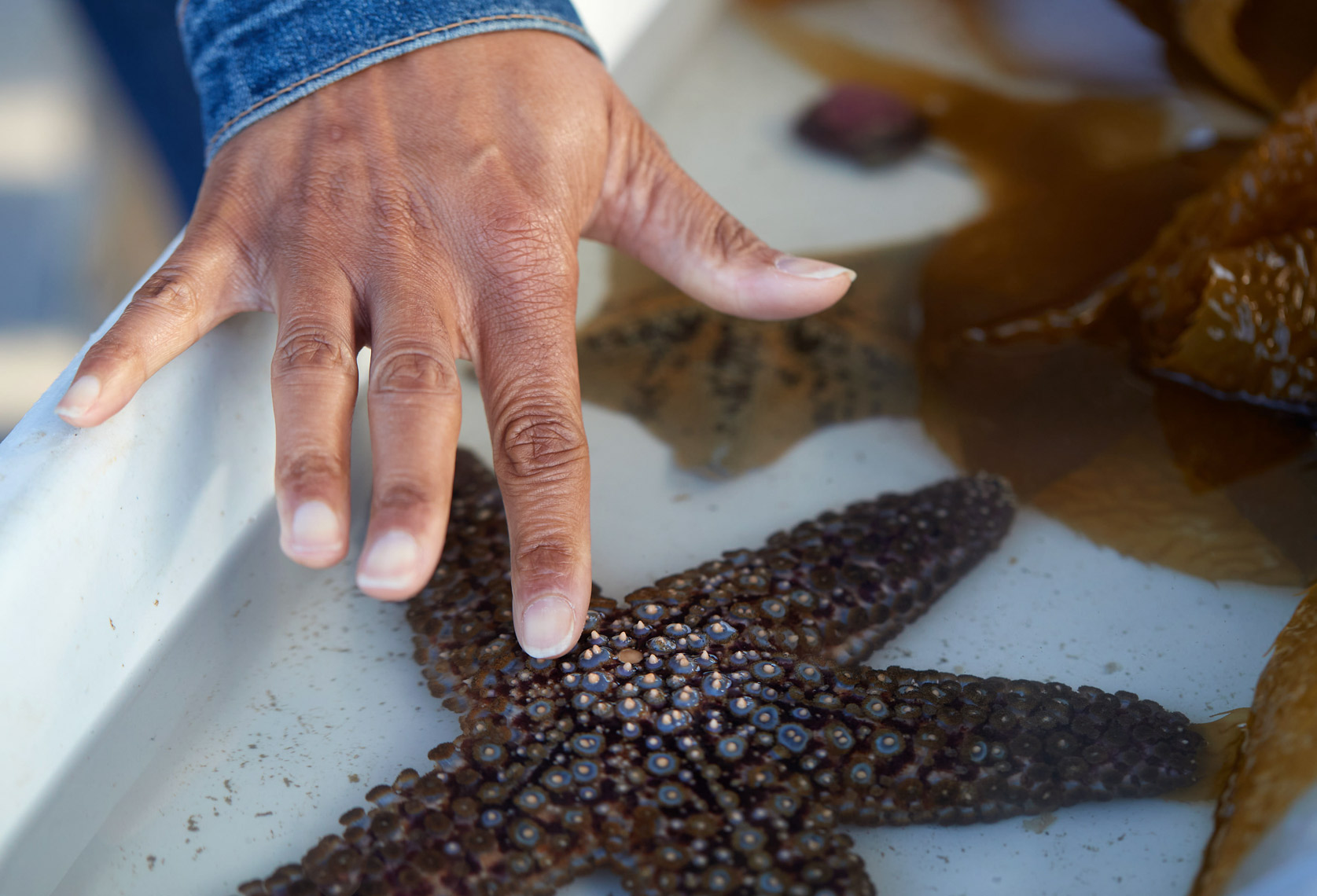 A Visitor Touches a Star Fish